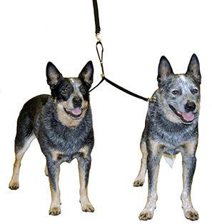 Double-Dog-Coupler-Large