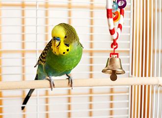 Bird Necessities