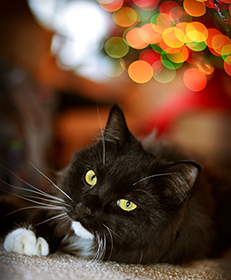 christmas-cat-loves-all-for-pets-sechelt