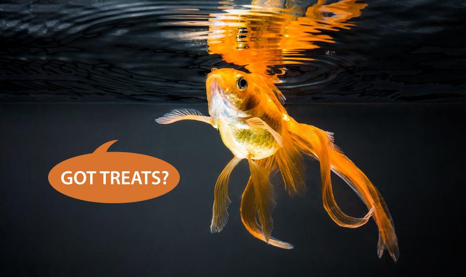 goldfish-pet-treats