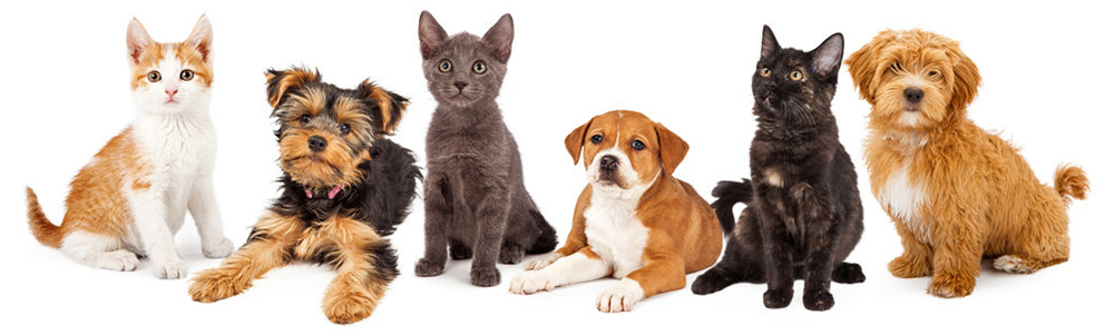 Puppies-Kittens-all-for-pets