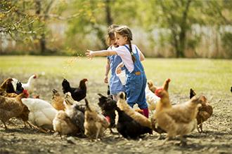 Farm Feed