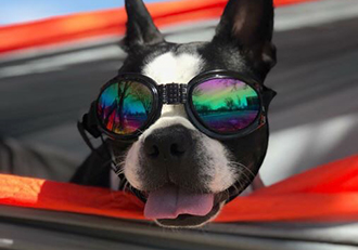dog-with-goggles