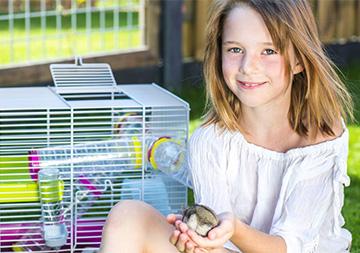 Small Animal Accessories