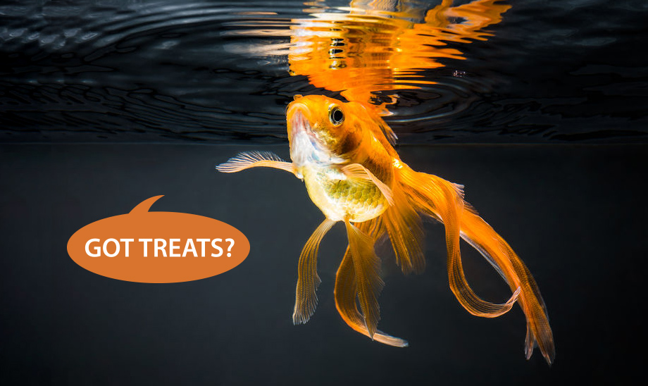goldfish-pet-treats