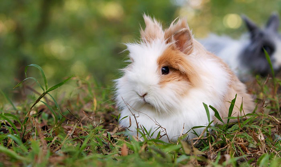 rabbits-small-animals