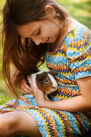 small-animals-all-for-pets-guinea-pigs